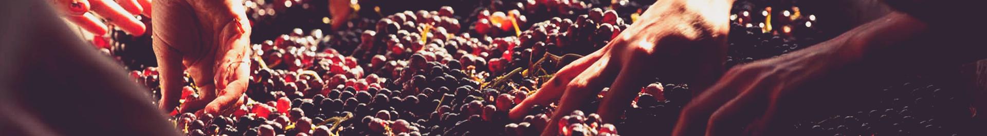 wines-11